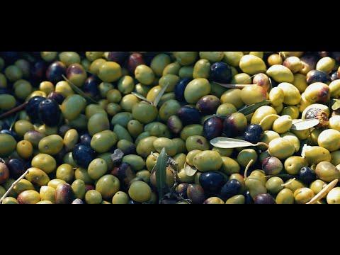 evento elaboración aceite ecologico