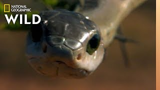 World Snake Day is Sssomething Ssspecial | Nat Geo WILD