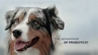 purina pro plan review - TH-Clip