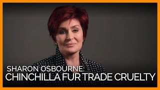 Sharon Osbourne Exposes Cruel Chinchilla Fur Trade