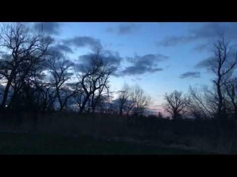 Sandhill Cranes flying over campsite at dusk