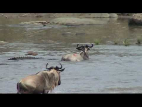 Serengeti: Battle at the Mara river; Great migration in the Serengeti letöltés