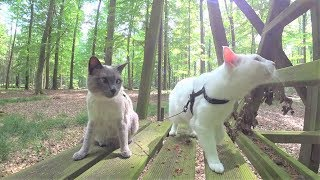 Tutorial: How NOT to Walk a Cat on Leash - 12 Common Mistakes