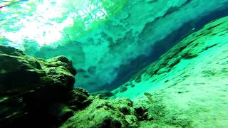 Free-diving Florida Springs