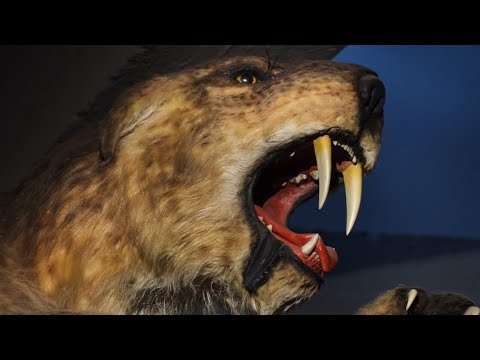 The Reason Why Saber-Toothed Tigers Went Extinct