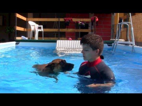 La scuola di nuoto per cani