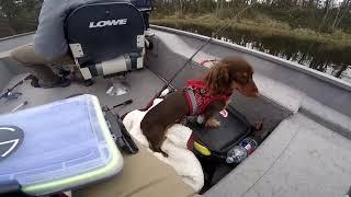 fishing on the lake with bait Super рыбалка на озере с приманкой Супер