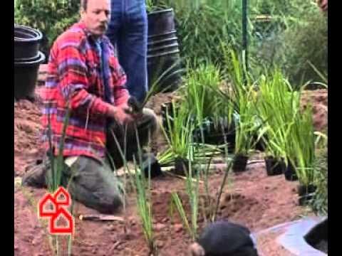 Gartenteich anlegen – so geht's richtig | BAUHAUS