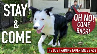 How To Practice ANY Canine a RELIABLE Come And Keep ANYWHERE!