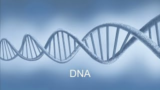 The Wonder of DNA with Ken Hm