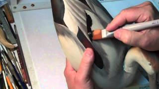 Painting A Gadwall Decoy By John Lawrence