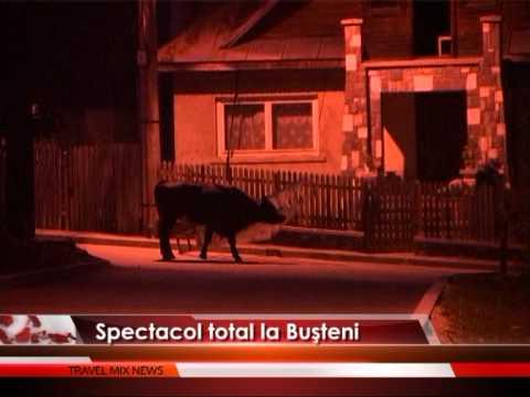 SPECTACOL TOTAL LA BUSTENI