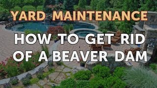 How to Get Rid of a Beaver Dam