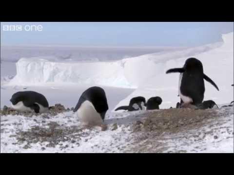Hırsız penguen