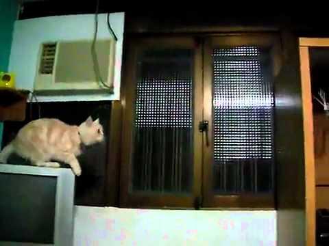 Amazing Cat Leap