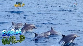 Born to Be Wild: Documenting the life of dolphins in Pamilacan, Bohol