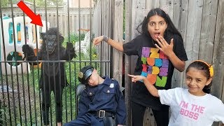 Monkey Escapes from Cage and Run from Police - kids pretend play