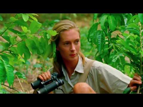 Jane Clip 'Chimps Using Tools'