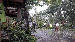 Hujan Es Melanda Wilayah Sleman, Sejumlah Pohon Tumbang