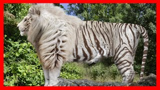 10 Most Bizarre Hybrid Animals That Actually Exist! by Epic Wildlife