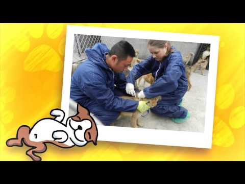 Animals Asia's Cat and Dog Welfare programme