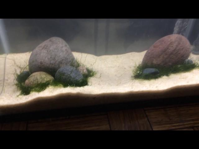 How to Create an Easy Aquascape | Betta Fish Tank