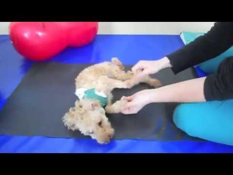 Giunto dislocate in gambe del bambino