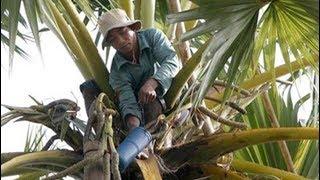 Legislator Komisi VII DPR RI Mukhtar Tompo Harap Pohon Lontara Jeneponto Potensi Jadi Bio Ethanol