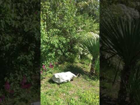 Дом с большим садом под ключ - Цандрипш, Лапстинская, 19 видео