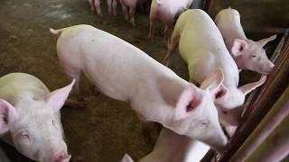 Cooperativa de Porcicultores de Puerto Rico