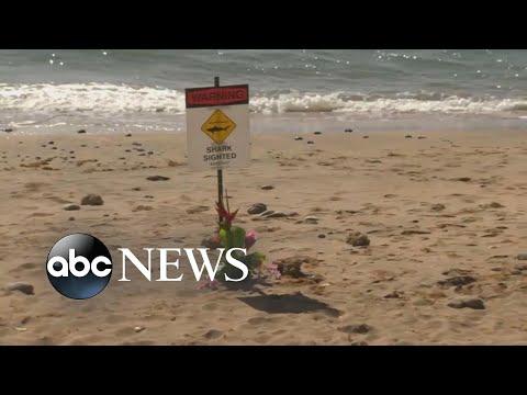 Swimmer dies from shark attack