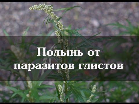 Грибы паразиты поражаемые им растения и наносимый вред