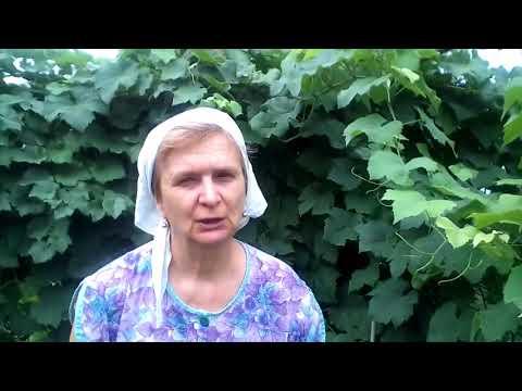 Тенториум. лечение простатита