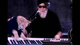 Keyboard Cat /Paul Oscher Collab/Cool Cat