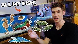 ALL MY FISH & RARE EXOTIC ANIMALS!!! (dorm room tour)