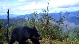 Peru News: I spy an Andean Bear and a Mountain Tapir