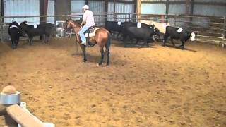 Bella Bowman ranch sorting mare for sale