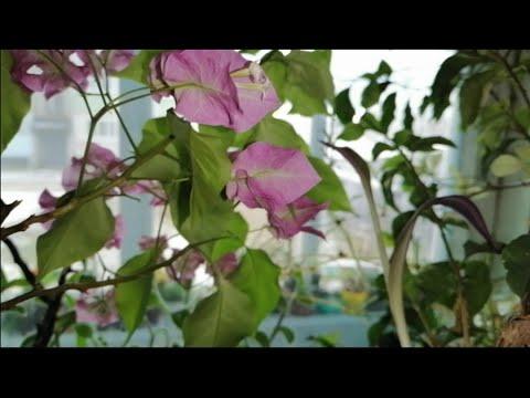 ИСТОРИЯ появления цветов в моём доме.Обзор ЦВЕТОВ с АВИТО, ВКОНТАКТЕ,комнатные цветы в ноябре.