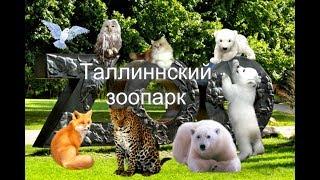 Таллиннский зоопарк.Июль.2017 год.
