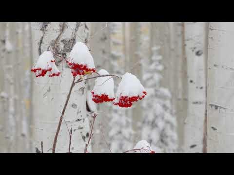 First Snow of 2019/20 Season  - © Steamboat Resort