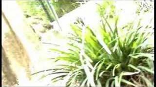 Serpentia