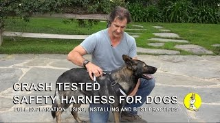 Dog Safety Harness - Use And Installation - Dog Training And Safety