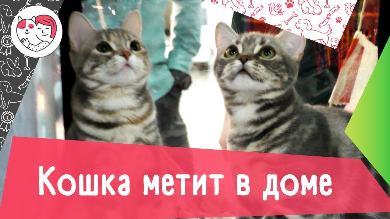4 причины, почему кошка метит в доме