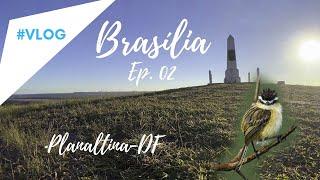 Passarinhando em BRASÍLIA-EP. 2 Planaltina -DF