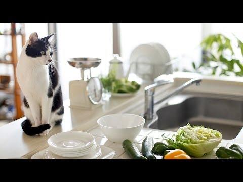 How to Keep Your Cat Off Counters | Cat Care