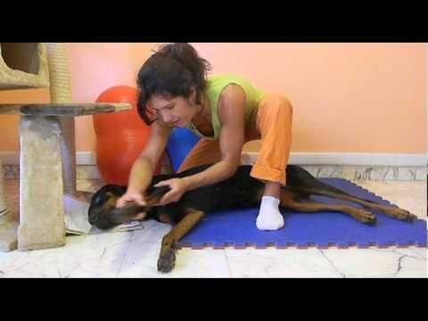 Complesso di esercizi fisici a mal di schiena più basso