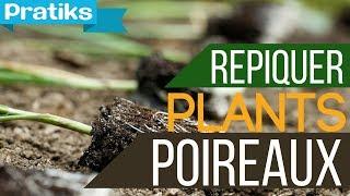 Comment repiquer des plants de poireaux