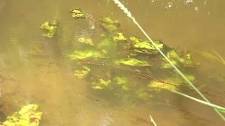 Харків'ян застерігають від купання в річці Уди