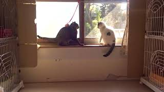成猫二匹の相性は? | Kholo.pk