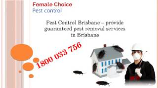 Same Day Pest Control Brisbane